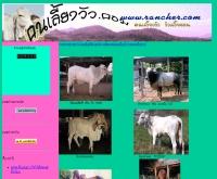 คนเลี้ยงวัว.คอม - geocities.com/ranchertanet