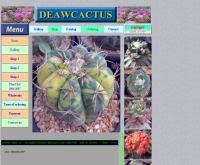 เดียวแคคตัส - deawcactus.com