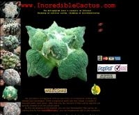อินคริดิเบิ้ลแคดตัส - incrediblecactus.com