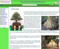 บอนไซทูเดย์ - bonsai-today.pantown.com
