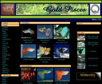 โกลด์ พิสเซส  - goldpisces.com