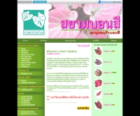 สยามบอนสี - siamcaladium.com