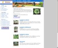ปาล์มและปรง - thaipalmcycad.com