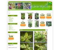 สวนลุงตี๋ - suanlungtee.com