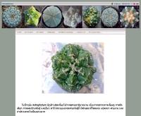 แอสโทรฟี่ทัมส์ - astrophytums.com