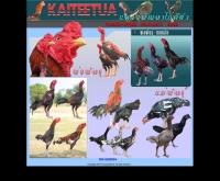 ไก่ตีตัว - kaiteetua.com