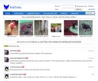 รักษ์ไก่ชน - rakkai.com/